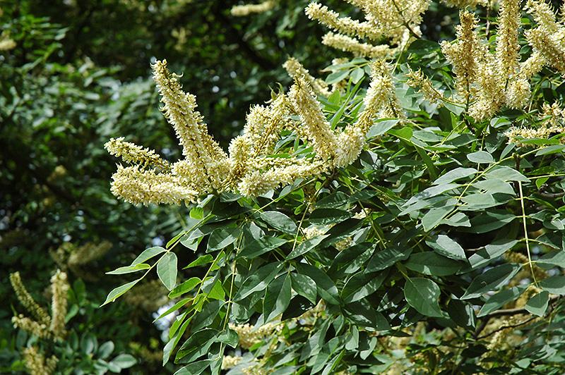 F097 07 - Plant Finder Inver Grove Heights Minnesota Mn Gertens