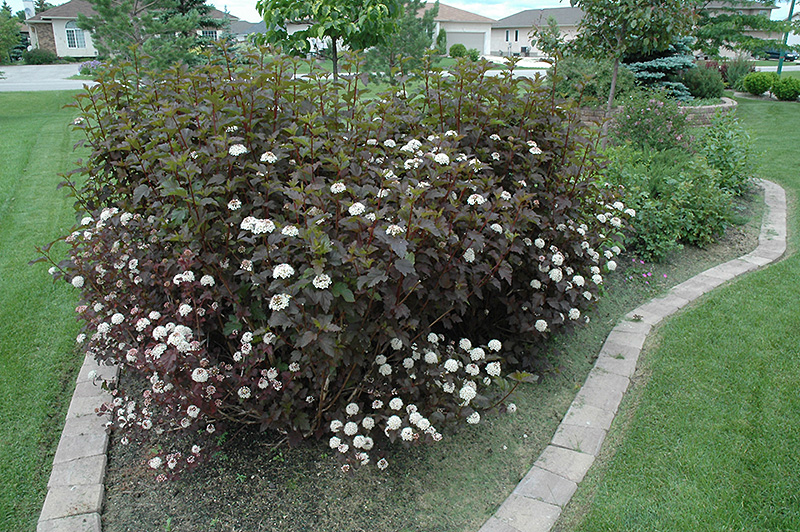 F253 03 - Plant Finder Inver Grove Heights Minnesota Mn Gertens