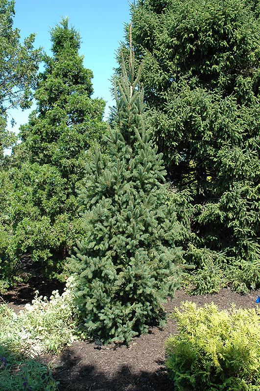 F656 24 - Plant Finder Inver Grove Heights Minnesota Mn Gertens