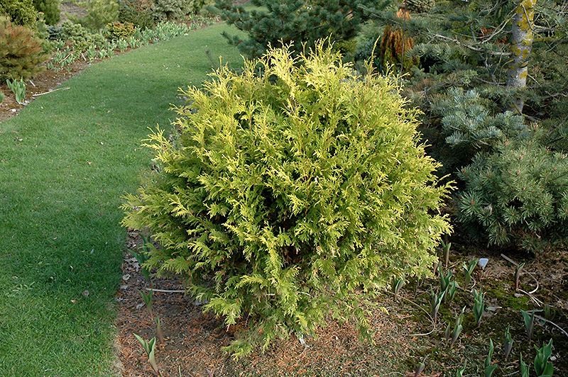 Full Sun Vegetable Garden Sunlight