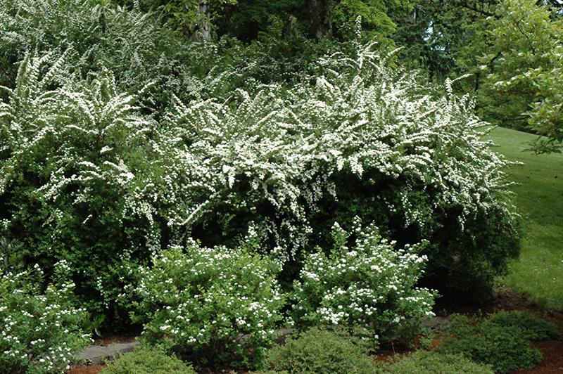 Spring Lemon Wreath