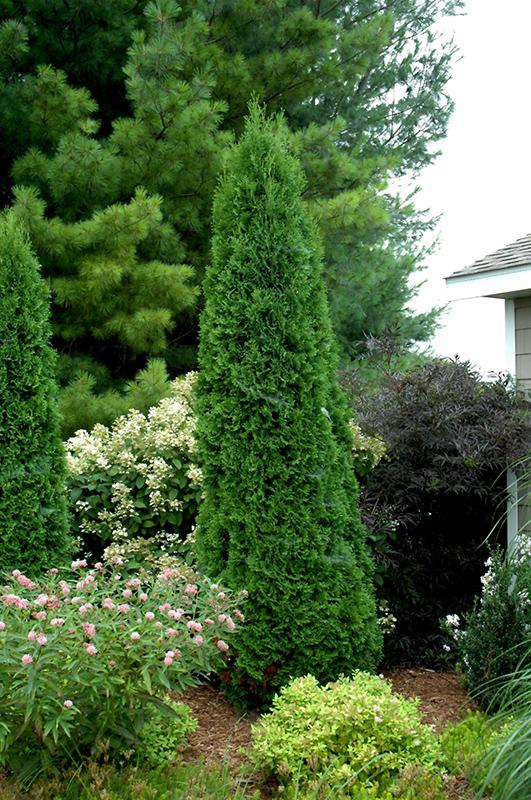 Japanese Garden Ideas Backyard
