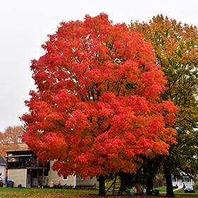 Shade Tree Photo